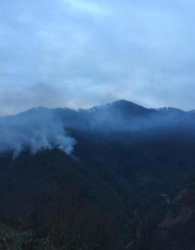 Artvin'de 4 hektarlık orman alanı yandı