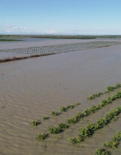 Adana'da sel mağduru çiftçiler, borçlarının ertelenmesini istiyor