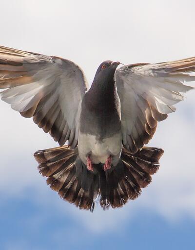 1.2 milyon euroya güvercin satıldı