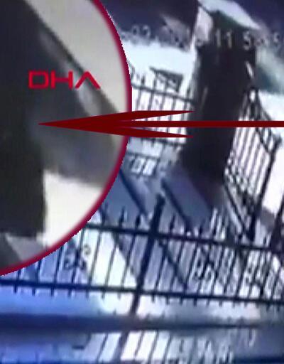 Kadıköy'de kediye tokat kavgası