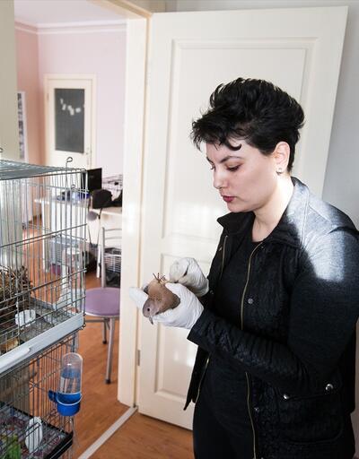 Evini yaralı ve hasta hayvanlara açtı