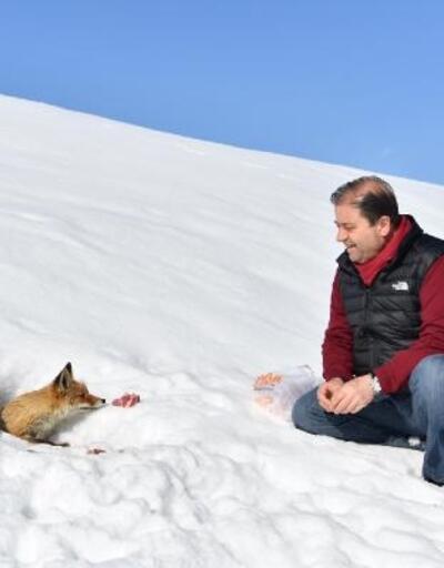 CHP'li başkan, yolda karşılaştığı tilkiyi besledi