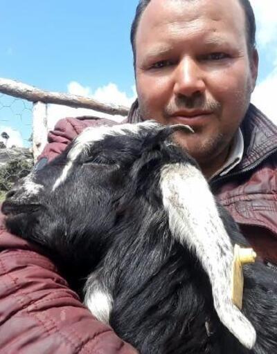 Kurtlar, keçi sürüsüne saldırdı