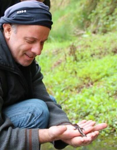 Göletteki şeritli su semenderlerinin yaşam alanı korunacak
