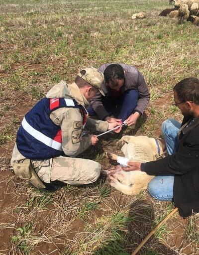 Kazada yaralanan köpeğe jandarma yardım etti