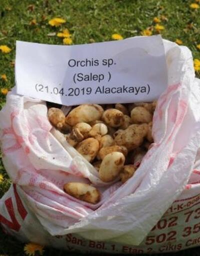 Elazığ'da 25 kilo salep soğanı ele geçirildi