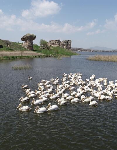 Frigya'nın yeni konukları 'Pelikanlar' oldu