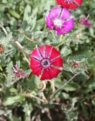 Sevgi çiçeği açtı