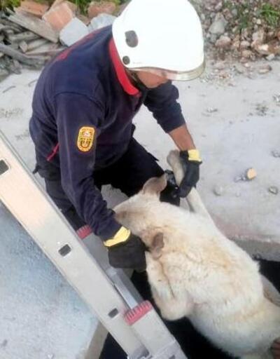 Köpeğin imdadına itfaiye yetişti