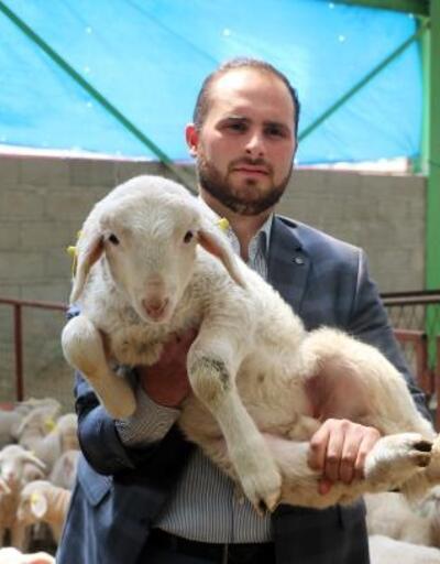 Cami imamı, görev yaptığı ilçeye koyun çiftliği kurdu