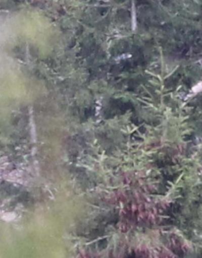 Terörist yayla ve ormanlarda yer gösteriyor