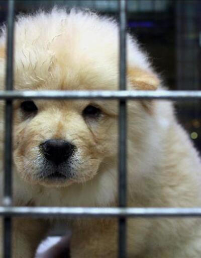 """""""Pet Shop'ta yenilik yok"""""""