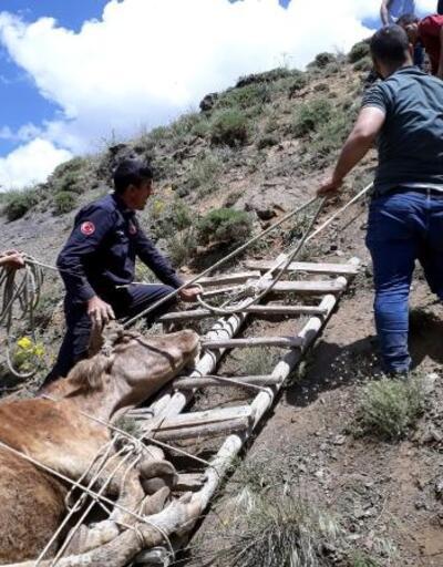 Dereye yuvarlanan inek, merdivenden yapılan sedye ile kurtarıldı