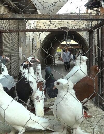 Bu güvercinleri almak için maaş bordrosu gerekiyor