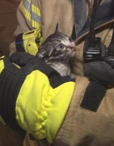 Yangında mahsur kalan yavru kediyi itfaiye erleri kurtardı