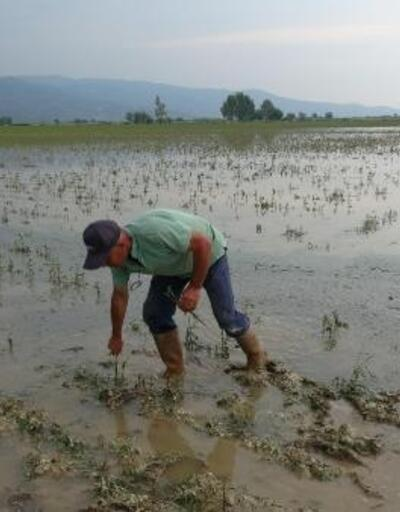 İncirliova'da dolu ve yağmur pamuğu vurdu