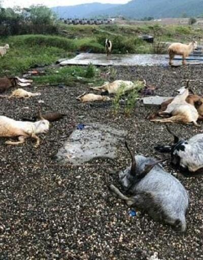Kastamonu'da yıldırım isabet eden koyun ve keçiler öldü