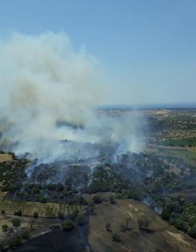 Ezine'de zeytinlik ve ot yangını