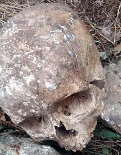 Ormanlık alanda kafatası ve çok sayıda kemik bulundu
