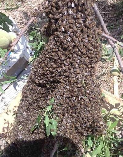 Arı üreticileri aşırı sıcaklardan şikayetçi