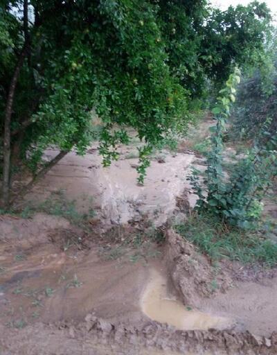 Karacasu'da şiddetli yağmur ve rüzgar bahçelere zarar verdi