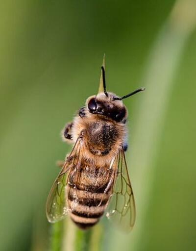 Arı-böcek-sivrisinek sokmalarına karşı alınabilecek 10 önlem