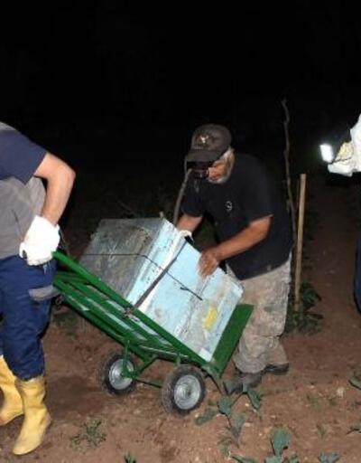 Dolu, arı kovanlarını taşıttı