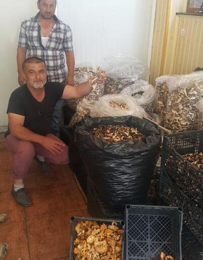 Sinop'tan dünyaya ihraç ediliyor, günde 7 bin lira kazanan bile var