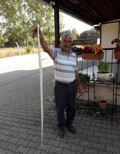 Tarlada 2 metre boyunda yılan yakalandı