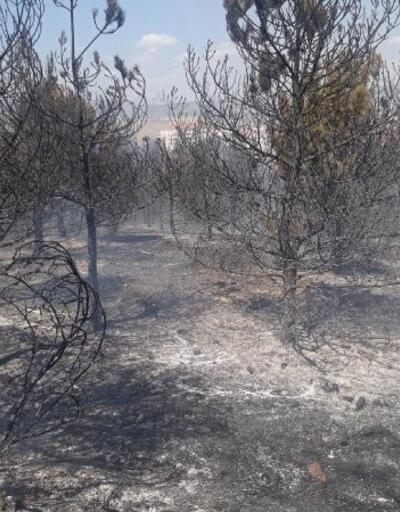 Ankara'da 20 dönüm orman alanı yandı