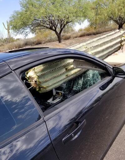 Arizona'da otomobil kaktüse daldı