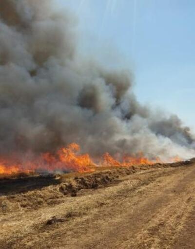Ceylanpınar'da anız yangını