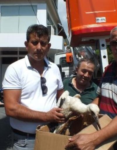 Bigadiç'te biri yavru 2 leylek kurtarıldı