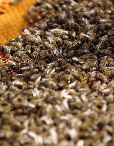 Sabiha Gökçen Havalimanı'nda bal arısı operasyonu