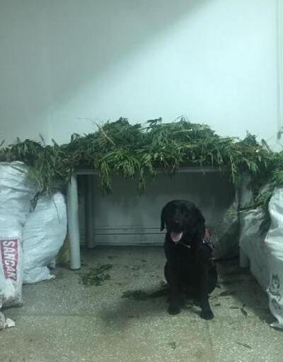 Narkotik köpeği 'Puslu' tepki verdi, uyuşturucu bulundu
