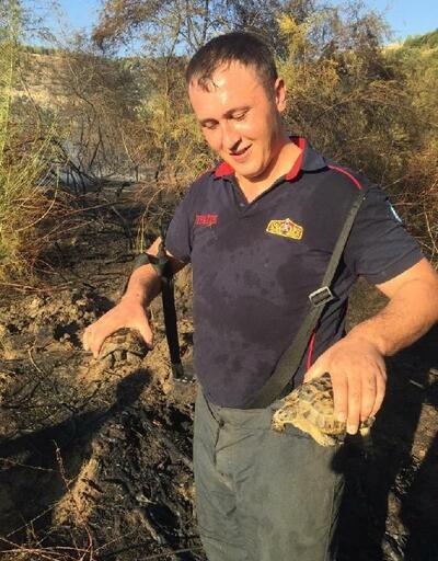 Kaplumbağaları alevlerin arasından itfaiye kurtardı