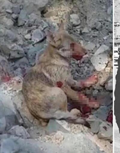 Erzurum'da skandal görüntü... Kurt yavrusuna işkence