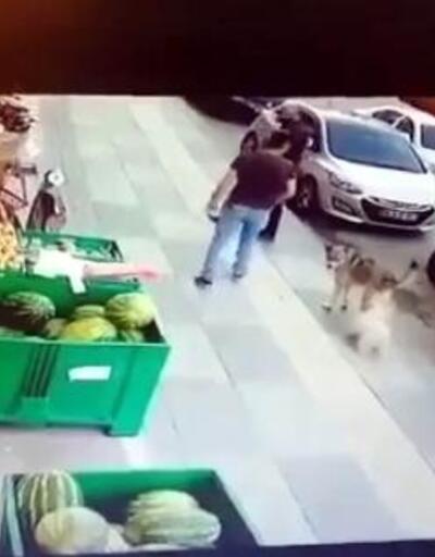 Süs köpeğiyle dalaşan sokak köpeğine tekme attı