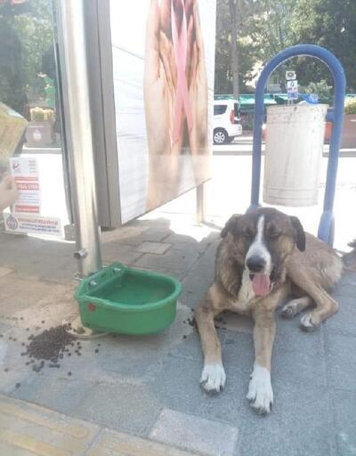Orhangazi'de sokak hayvanları sahipsiz değil