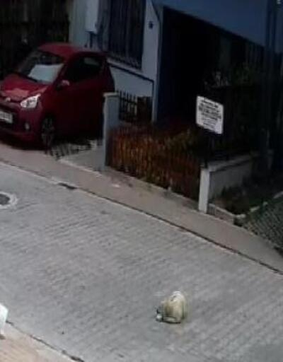 Kayaşehir'de bir sürücünün otomobiliyle köpeği ezme anı kamerada