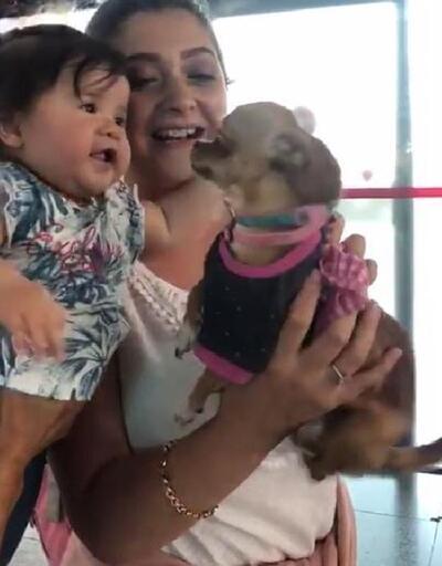 Sevimli köpek 'Barbie'den havalimanında gülümseten karşılama