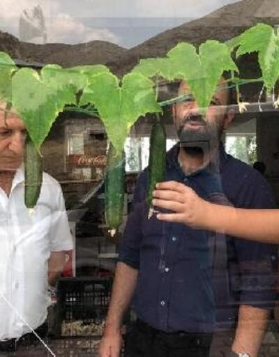 Markette sebze yetiştiriyor