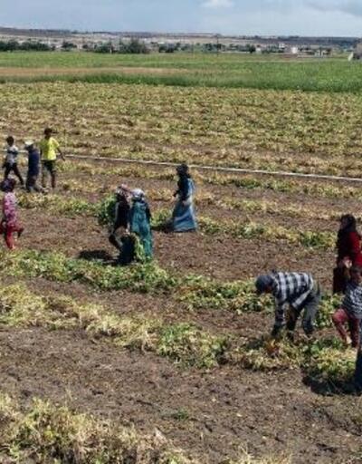 Nevşehir'de tarım işçilerinin zorlu yaşamı