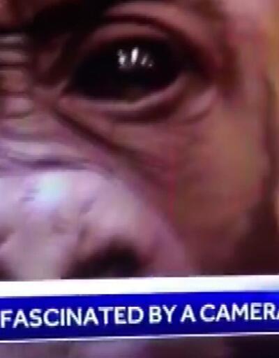 Canlı yayında skandal: Siyahi sunucu arkadaşını gorile benzetti, ağlayarak özür diledi