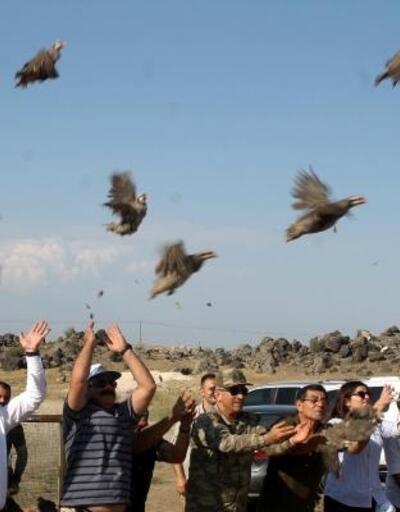Ağrı Dağı'na bin keklik bırakıldı
