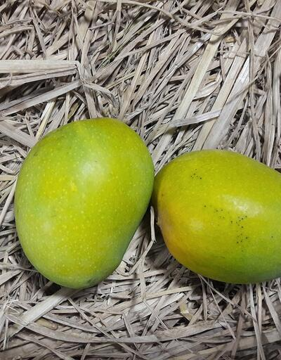 Kansızlıktan kansere... Mucize besin mangonun iyi gelmediği şey yok