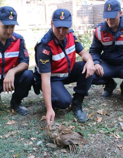Jandarma'dan yaralı baykuşa yardım eli