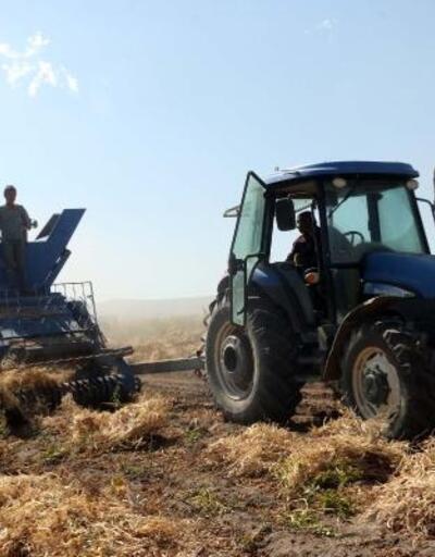 Türkiye'nin kuru fasulye ihtiyacının yüzde 10'u Bitlis'ten