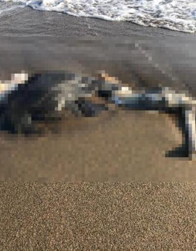 Kıyıya vurmuş insan iskeleti bulundu