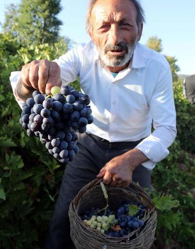 Bitlis'te üzüm hasadı başladı